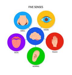 Five human senses banner in flat style vector