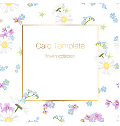 floral collection card template daisy chamomile vector image