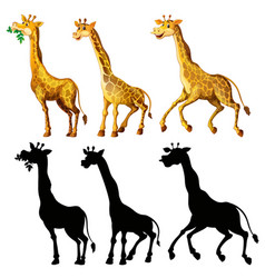 Giraffe and its silhouette in three actions vector