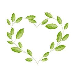 Green vine leaves in a beautiful heart shape vector