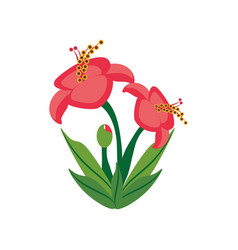hibiscus flower spring image vector image