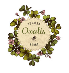 round paper emblem over hand drawn oxalis vector image