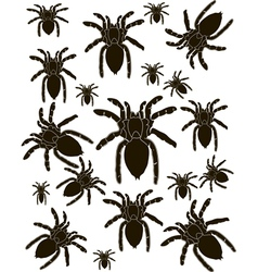 Set Spider Silhouette vector
