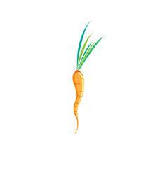 sign of bright carrots vector image