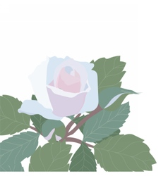 Watercolor Delicate Rose isolated vector image