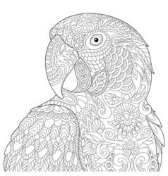 Zentangle stylized macaw vector image
