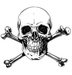 graphic detailed human skull with crossed bones vector image