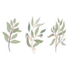 hand drawn organic style seeded eucalyptus leaves vector image