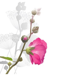 Malva flower arrangement vector