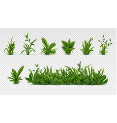 Realistic green grass 3d fresh spring plants vector