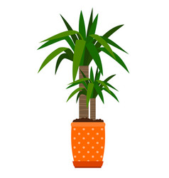 yucca houseplant in flower pot vector image