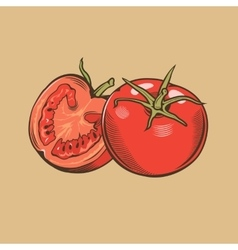 Tomatoes in vintage style Colored vector image vector image