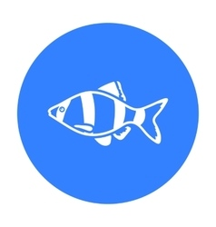 Barbus fish icon black Singe aquarium fish icon vector image