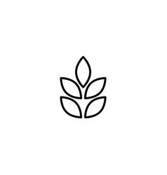 Barley wheat icon vector