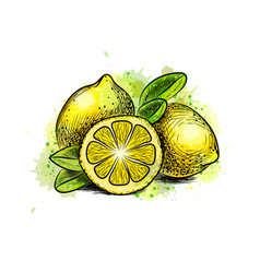 lemon with leaves from a splash watercolor vector image
