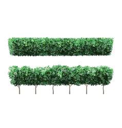 realistic garden plant fence nature green vector image