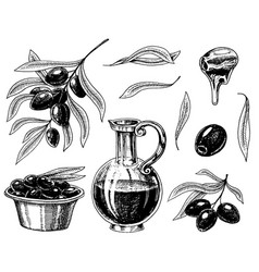 set olive oil and branch trees organic vector image