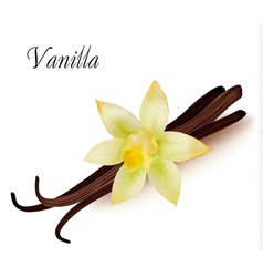 Vanilla pods and flower vector