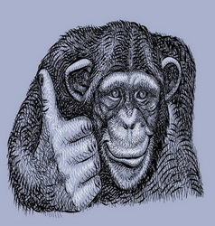 Chimpanzee drawing vector image