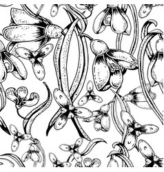 black-white snowdrops floral seamless pattern vector image