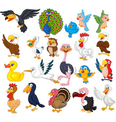 Cartoon bird collection set vector