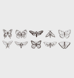 collection butterfly or wild moths insects vector image