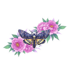 Deaths-head hawk moth with pink peonies vector