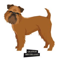 dog collection griffon bruxellois isolated object vector image