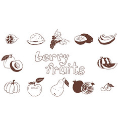 doodles fruit large selection on white background vector image