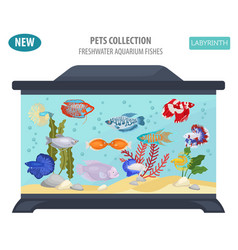 Freshwater aquarium fishes breeds icon set flat vector