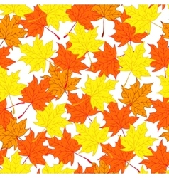 Maple leaves Autumn and bright background vector image vector image