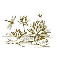 flowers water lilies vector image