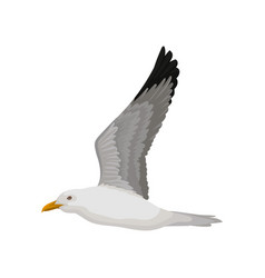 Flying seagull gray and white sea bird side view vector