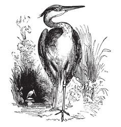 Heron vintage vector