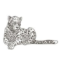 Leopard animal resting on ground monochrome sketch vector