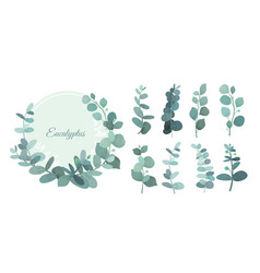Set of eucalyptus leafs and vector