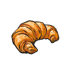 sketch fresh french croissant isolated vector image