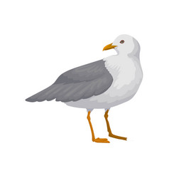 Beautiful seagull gray and white sea bird vector