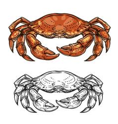 Crab animal sketch sea shellfish or crustacean vector