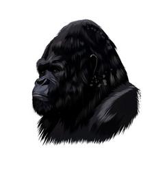 gorilla head portrait from a splash watercolor vector image