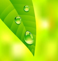 leaf drops vector image
