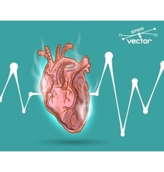 Human heart beat vector image