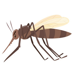 mosquito flying on white background vector image