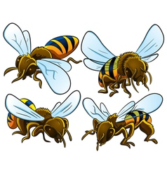 Bees Collection vector image vector image