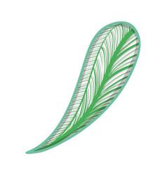 leaf of natural plant herb botany vector image