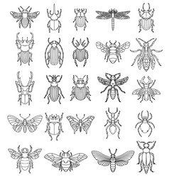 set insects on white background design vector image
