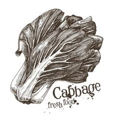 cabbage logo design template fresh vector image vector image