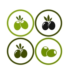 set of colorful olives vector image vector image
