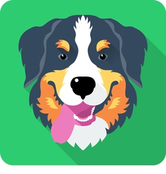 Bernese Mountain Dog icon flat design vector image