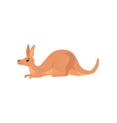 Brown lying kangaroo cute wallaby australian vector